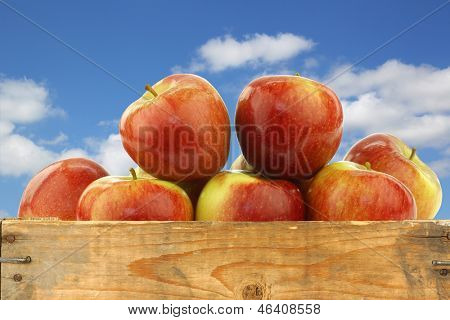 bunch of braeburn apples in a wooden crate against a blue sky with clouds