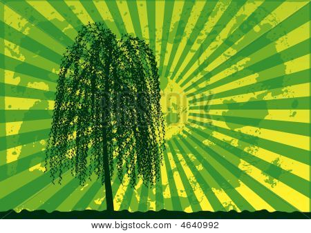 Tree silhouette on grunge rays background. Green - yellow palette. Vector illustration. poster