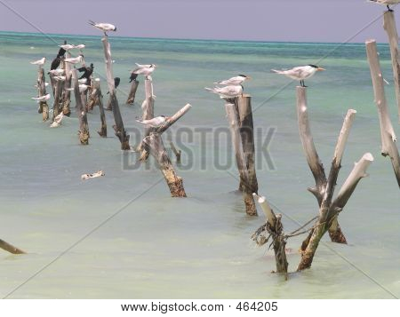 Birds On Posts