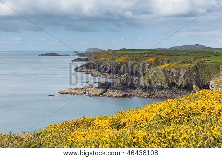 Wales Coastal Path Caerfai Bay Pembrokeshire West Wales UK near St Davids and in the Coast National Park poster