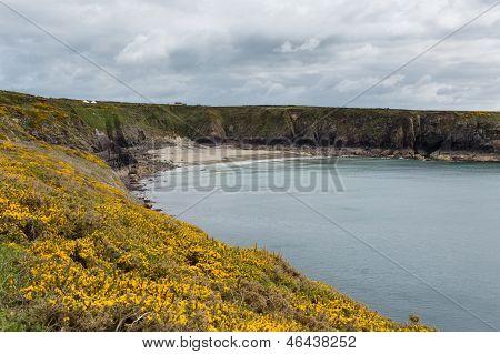 Caerfai Bay Pembrokeshire West Wales UK