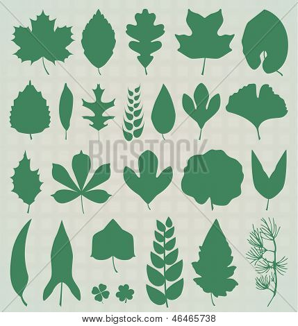 Vector Set: Leaf Silhouettes
