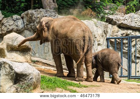 Mother And Baby Elephant In Chiangmai Zoo , Thailand