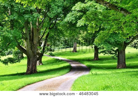 Avenue of trees with a road winding through