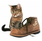 Cat and boot over the white . poster