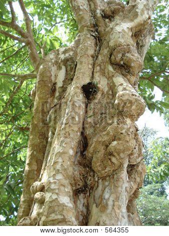 Wood Bark On A Tree