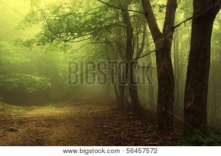 Green forest with fog and trees in summer