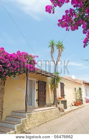 Bouganvillea By The Street