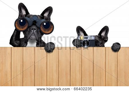Two Nosy Dogs