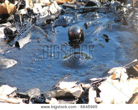Tar bubbles up at the La Brea Tar Pits in Los Angeles. poster