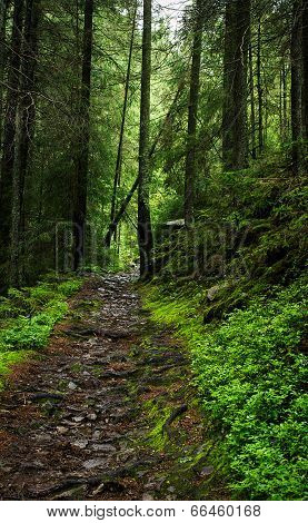 Mysterious Forest Path