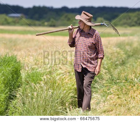 Old Man In Barley Field