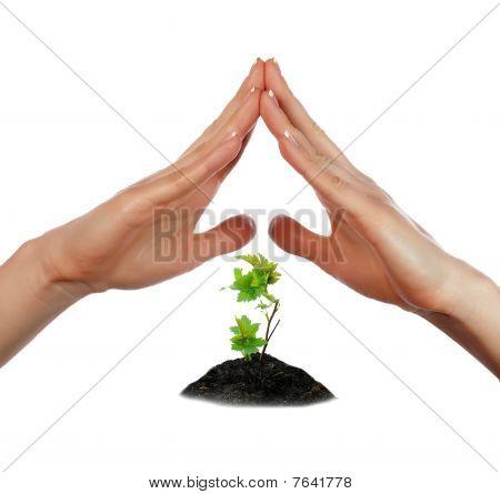 Las palmas y el árbol