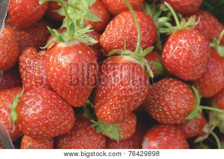 Pile of ripe garden strawberries close-up. Shallow depth of field poster