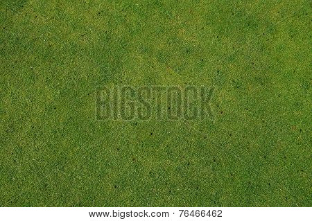 Aerated putting green on golf course - maintenance background
