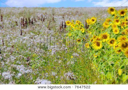 A Beautiful Field Of Flowers
