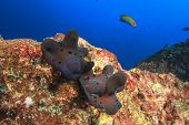 Sponge snails mating poster