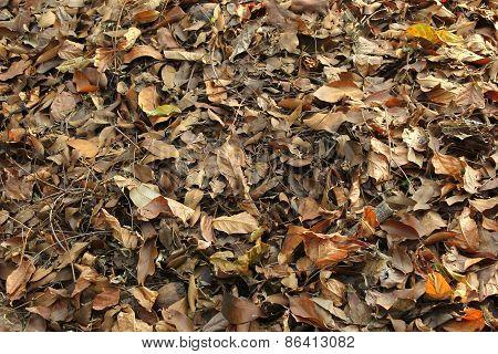 the leaf debris on the forest floor poster