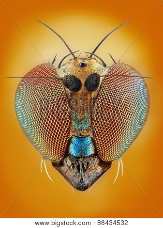 Extreme sharp and detailed study of 2 mm long legged fly taken with 25x microscope objective stacked