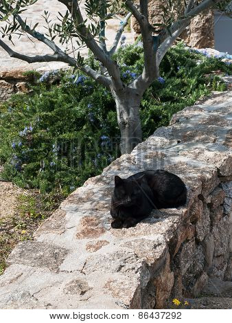 Greek -black Cats Cat Sleeping In The Garden Under The Tree.