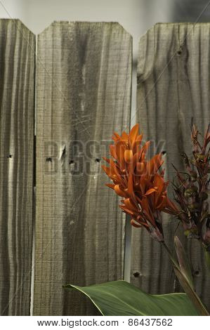 Flower On A Fence