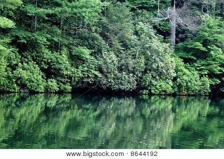 Forest reflected in a tranquil lake