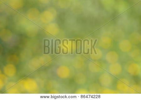 blurred flowers bokeh background; defocused