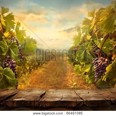 Vineyard Design