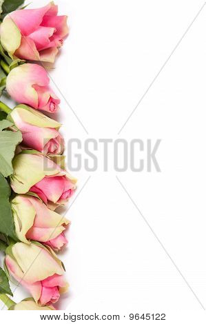 Flowers frame isolated on white card blank