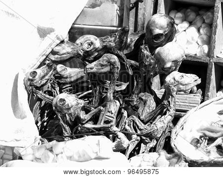 Dried fetus of llamas