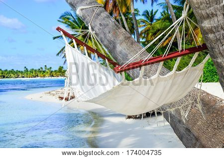 Idyllic beach with coconut trees and hammock in the Dominican Republic/
