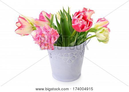 flowers tulips in decorative bucket isolated on white background