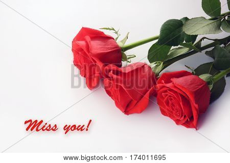 Red roses close up. Beautiful bouquet. Miss You card