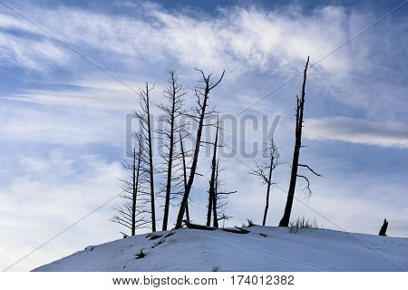 Silhouette of Bare Trees on Snow Covered Hill