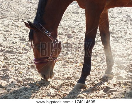 Portrait of brown horse. Profile of horse
