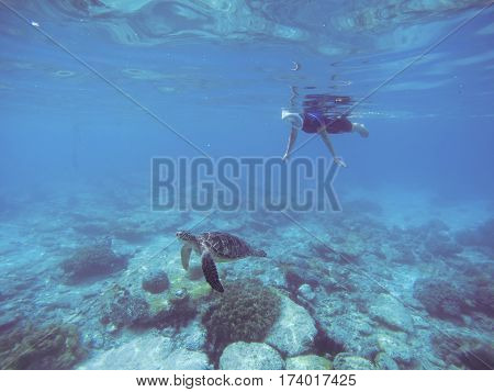 Snorkel with sea turtle. Woman swims undersea in swimming costume and full-face mask. Underwater photo of female snorkel. Snorkeling in coral reef with marine animal. Tropical sea nature background