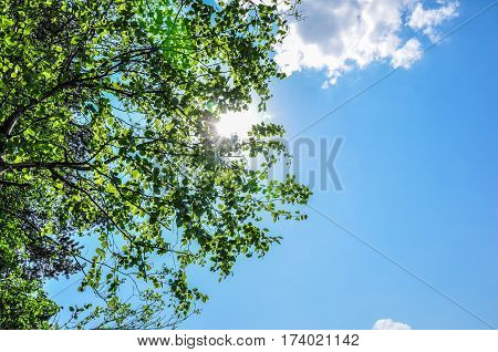 Sun Rays Shining Trough Green Leaves And Branches In Blue Sky