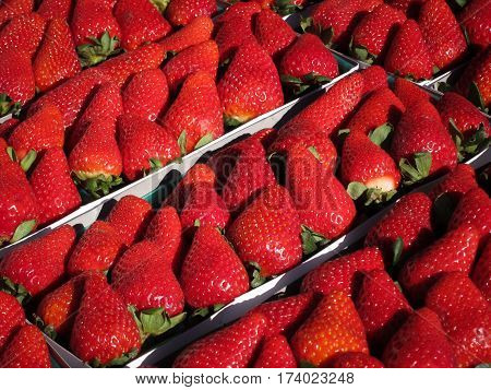 Boxes of red, freshly-picked strawberries for sale at farmer's market, diagonal arrangement.