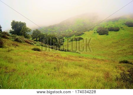 Lush green field with grasslands and chaparral plants in the fog taken at Johnsons Pasture in Claremont, CA