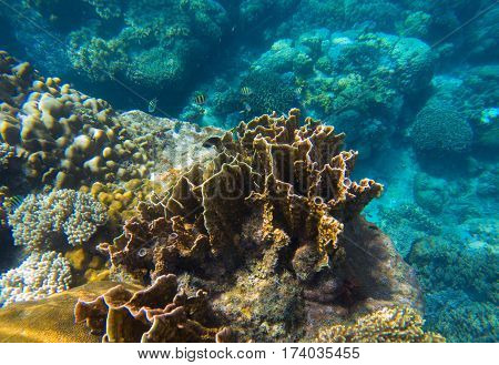 Undersea landscape with coral reef relief. Tropical sea lagoon with diverse corals. Yellow coral reef close photo. Underwater view in exotic island seashore. Snorkeling image from warm tropical sea