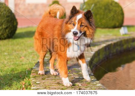 Elo Dog Standing On The Border Of A Pond