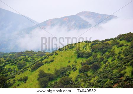 Lush green grasslands with chaparral plants taken at the San Gabriel Mountain Foothills in Claremont, CA during a rain storm