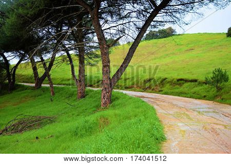 Pathway thru a lush green field surrounded by Pine Trees taken at Johnsons Pasture in Claremont, CA during the rain