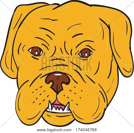 Illustration of a Dogue de Bordeaux Bordeaux Mastiff viewed from front set on isolated white background done in cartoon style.