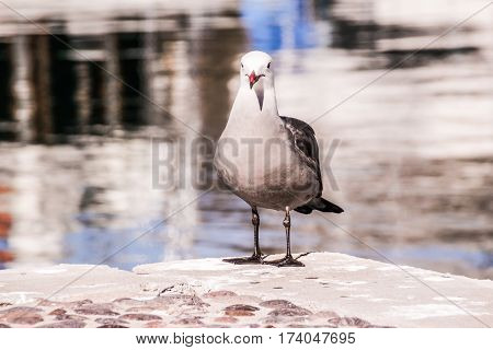 Seagull And Marine Environment Photograph