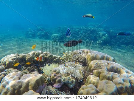 Underwater landscape with tropical fishes. Coral reef landscape with parrotfish. Clean blue sea water in tropical lagoon. Exotic nature undersea. Snorkeling photo of coral ecosystem with sea animals