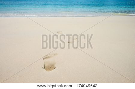 footsteps on coral sandy beach summer background