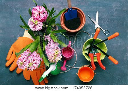 Beautiful flowers and gardener equipment on table