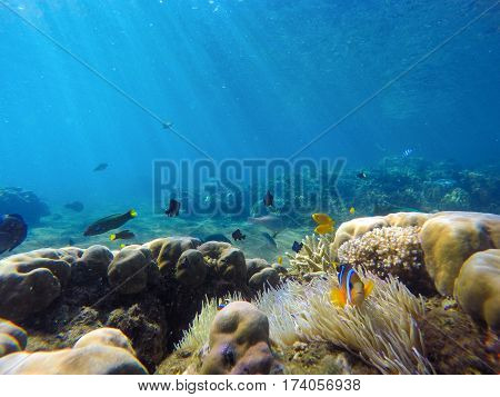 Coral reef landscape with colorful tropical fishes. Blue sea water with sunlight rays. Snorkeling photo of sea bottom with corals and sea plants. Oceanic life ecosystem. Butterflyfish and thalassoma