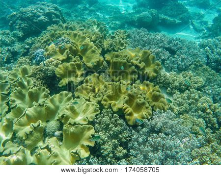 Underwater landscape with coral reef relief. Tropical sea lagoon with diverse corals. Yellow coral reef on sea bottom. Undersea view in exotic island seashore. Snorkeling image from tropical sanctuary